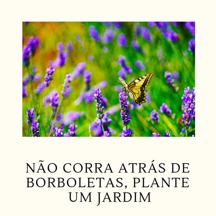 Não corra atrás de borboletas, plante um jardim